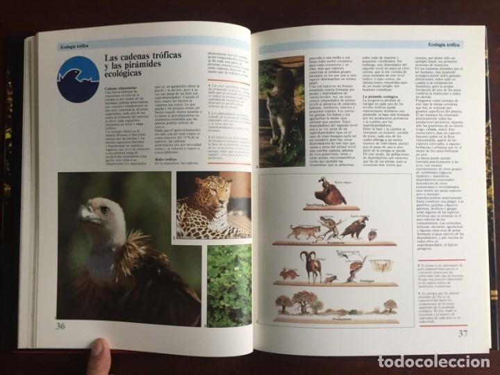 Libros: Ciencias Ecología. Colección gran enciclopedia de las ciencias Estudio sobre las ciencias ecologicas - Foto 12 - 180492091