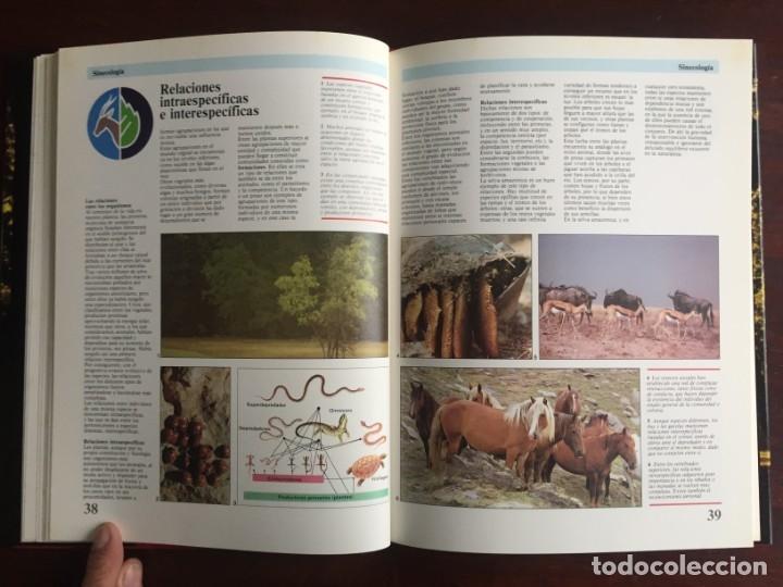 Libros: Ciencias Ecología. Colección gran enciclopedia de las ciencias Estudio sobre las ciencias ecologicas - Foto 13 - 180492091