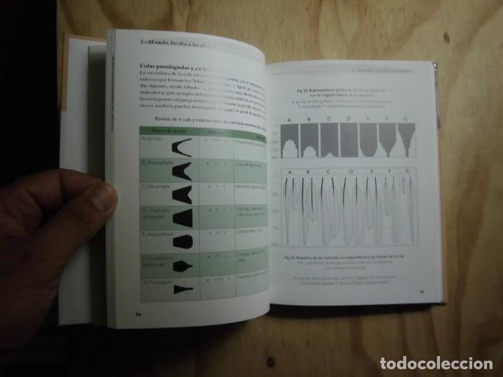 Libros: RECONOCER FÁCILMENTE LAS PLUMAS CLOÉ FRAIGNEAU LAS GUÍAS DEL NATURALISTA ORNITOLOGÍA - Foto 4 - 190044823