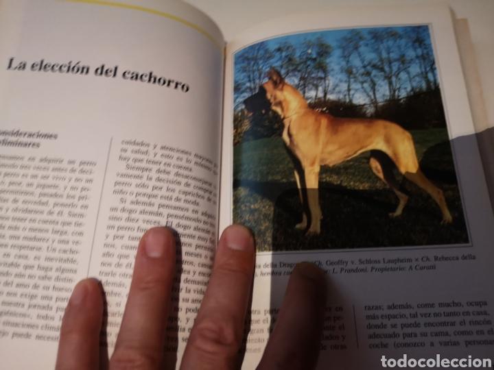 Libros: El Dogo Alemán Perros de Raza - Foto 2 - 206940562