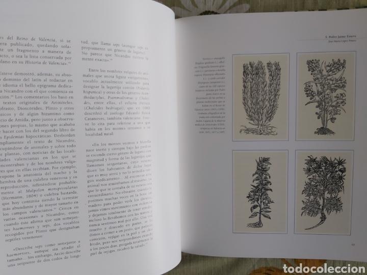 Libros: LA ESCUELA BOTÁNICA VALENCIANA DEL RENACIMIENTO. NUEVO! ED. 2010 - Foto 7 - 229348390