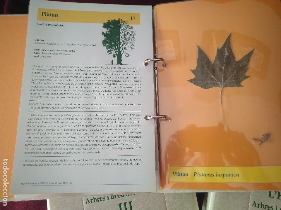 Libros: COLECCION DE 3 TOMOS DE HISTORIA NATURAL DEL PAISOS CATALANS- LHERBARI - Foto 3 - 237675490