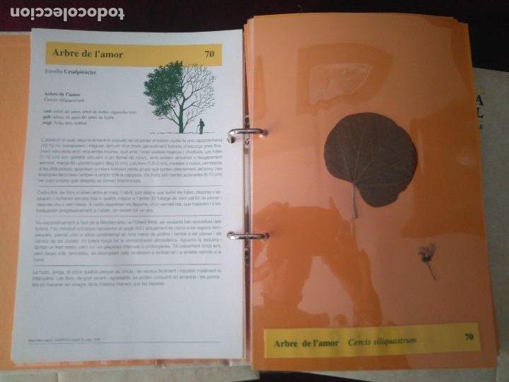Libros: COLECCION DE 3 TOMOS DE HISTORIA NATURAL DEL PAISOS CATALANS- LHERBARI - Foto 4 - 237675490