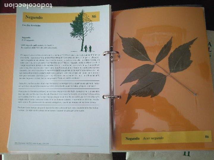 Libros: COLECCION DE 3 TOMOS DE HISTORIA NATURAL DEL PAISOS CATALANS- LHERBARI - Foto 5 - 237675490