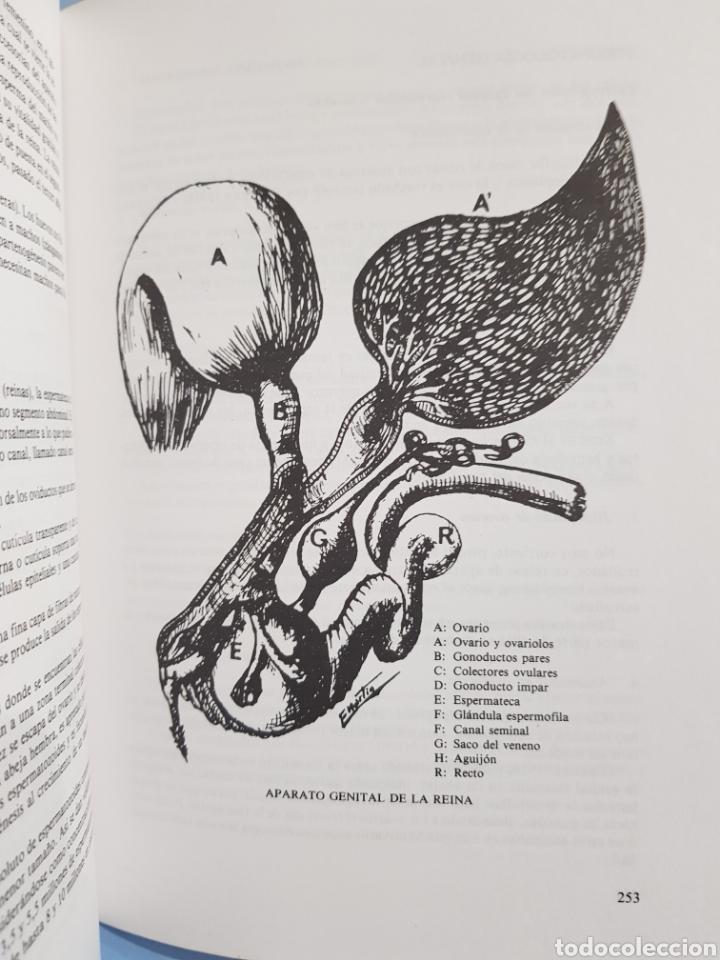 Libros: Curso de Apicultura ,edita Ministerio de Agricultura, año 1989 - Foto 5 - 251912330