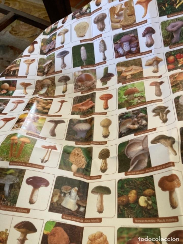 Libros: Guía de campo del BUSCADOR DE SETAS. Como reconocer las mejores setas comestibles - Foto 2 - 271089438