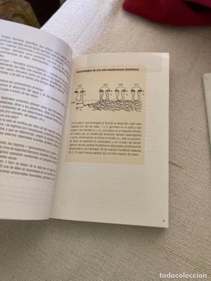 Libros: Guía de campo del BUSCADOR DE SETAS. Como reconocer las mejores setas comestibles - Foto 4 - 271089438