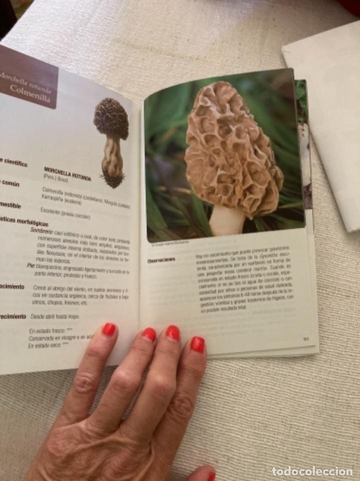 Libros: Guía de campo del BUSCADOR DE SETAS. Como reconocer las mejores setas comestibles - Foto 6 - 271089438