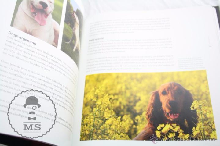 Libros: Enciclopedia de 11 Tomos - Reino Animal. Instinto Supervivencia - Ed. Signo, Año 2011 - Foto 5 - 51574908