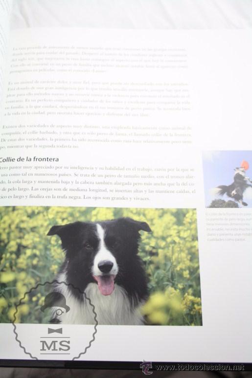 Libros: Enciclopedia de 11 Tomos - Reino Animal. Instinto Supervivencia - Ed. Signo, Año 2011 - Foto 7 - 51574908