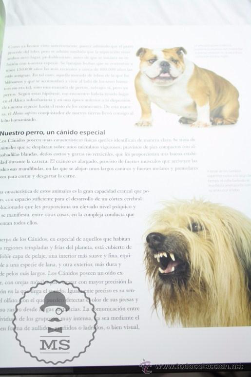 Libros: Enciclopedia de 11 Tomos - Reino Animal. Instinto Supervivencia - Ed. Signo, Año 2011 - Foto 9 - 51574908