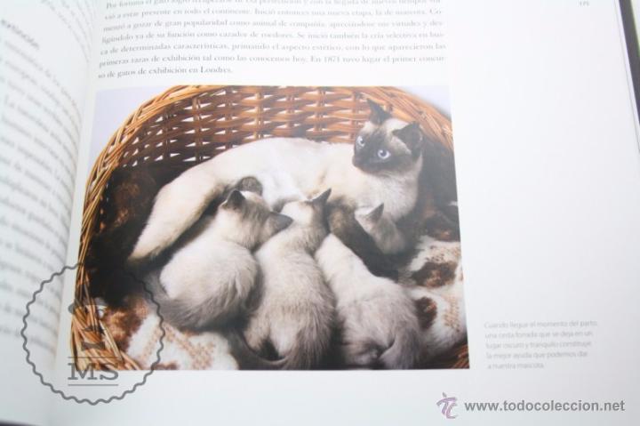 Libros: Enciclopedia de 11 Tomos - Reino Animal. Instinto Supervivencia - Ed. Signo, Año 2011 - Foto 11 - 51574908