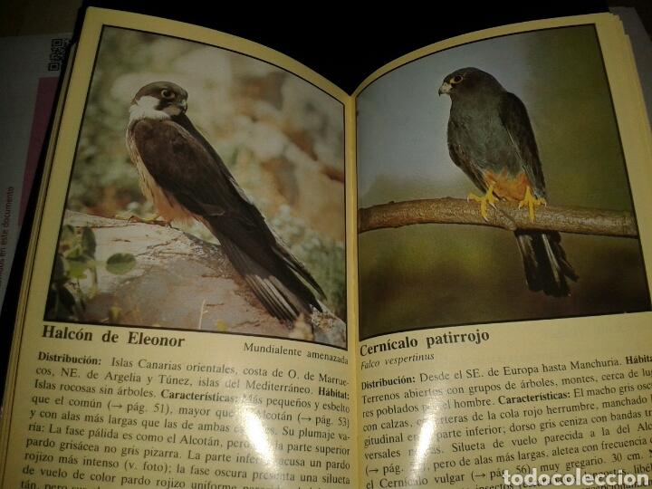 Libros: GUIA NATURALEZA EVEREST AVES RAPACES - Foto 2 - 136729162