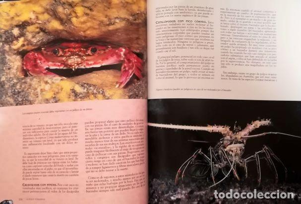 Libros: EL MUNDO SUBMARINO - Foto 6 - 204517395