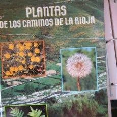 Libros: PLANTAS DE LOS CAMINOS DE LA RIOJA DE DOMINGO GONZÁLEZ MARTÍNEZ. Lote 217775752