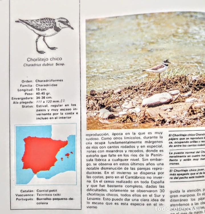 Libros: FAUNA IBERICA.PAJAROS DE LA COSTA 2. - Foto 2 - 240718515