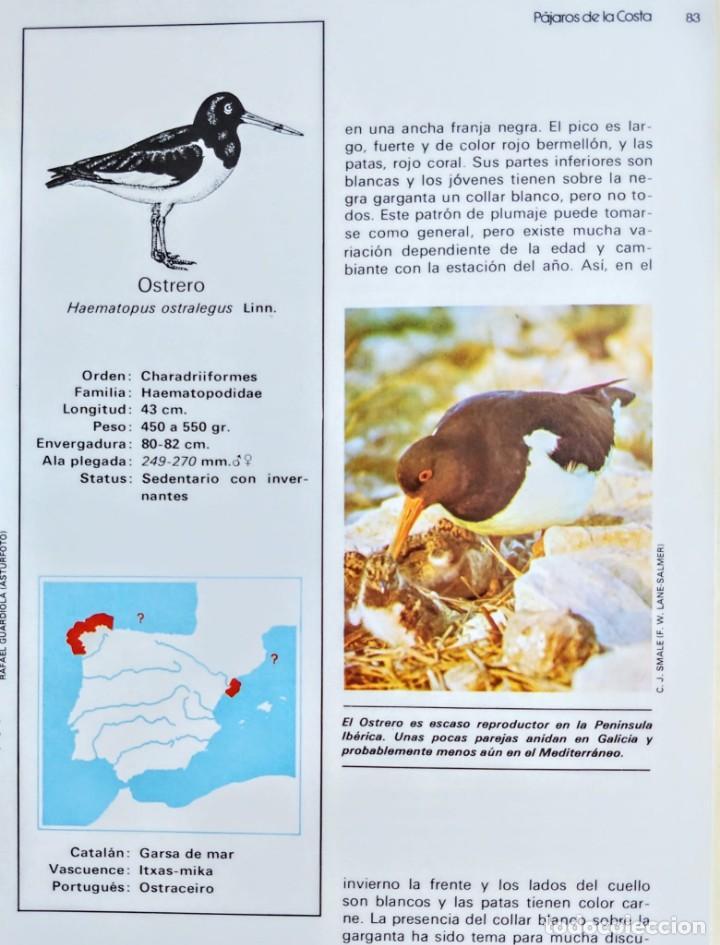 Libros: FAUNA IBERICA.PAJAROS DE LA COSTA 2. - Foto 4 - 240718515