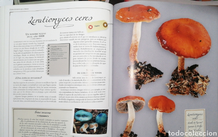 Libros: LAS SETAS. LAROUSSE - Foto 2 - 243551100