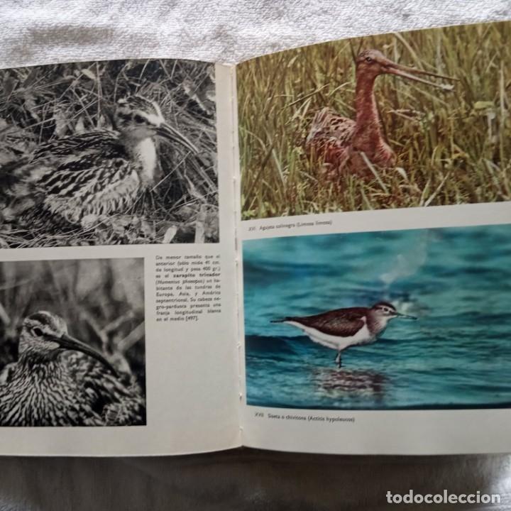 Libros: gran enciclopedia ilustrada de las aves j. hanzak 1971 - Foto 4 - 181725647