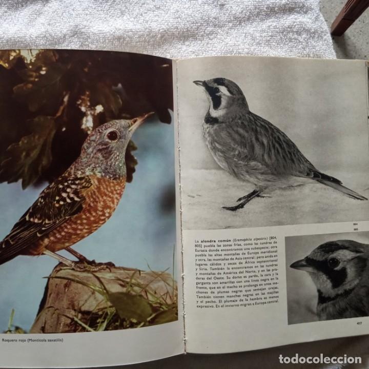 Libros: gran enciclopedia ilustrada de las aves j. hanzak 1971 - Foto 5 - 181725647