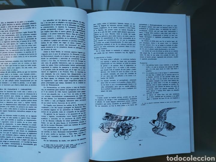 Libros: El Arte de la Cetrería. Félix Rodríguez de la Fuente - Foto 3 - 182786446