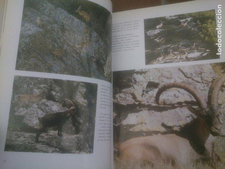 Libros: El Macho Montes. Exposición monográfica de una pieza de caza. - Foto 2 - 248831470