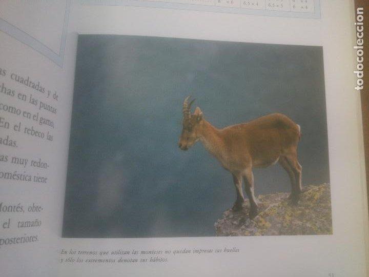 Libros: El Macho Montes. Exposición monográfica de una pieza de caza. - Foto 3 - 248831470