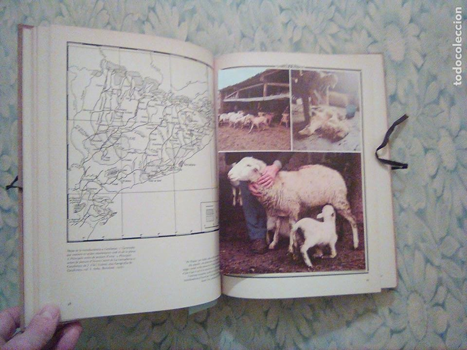 Libros: 2. ELS FORMATGES DE CATALUNYA - E.CANUT -F.NAVARRO - ALTA FULLA - COM FER-LOS, EINES, RAMATS... - Foto 4 - 194533026