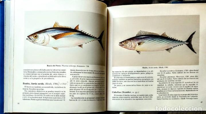 Libros: LOS PECES AZULES DE NUESTRAS COSTAS. FROM - Foto 2 - 238772805