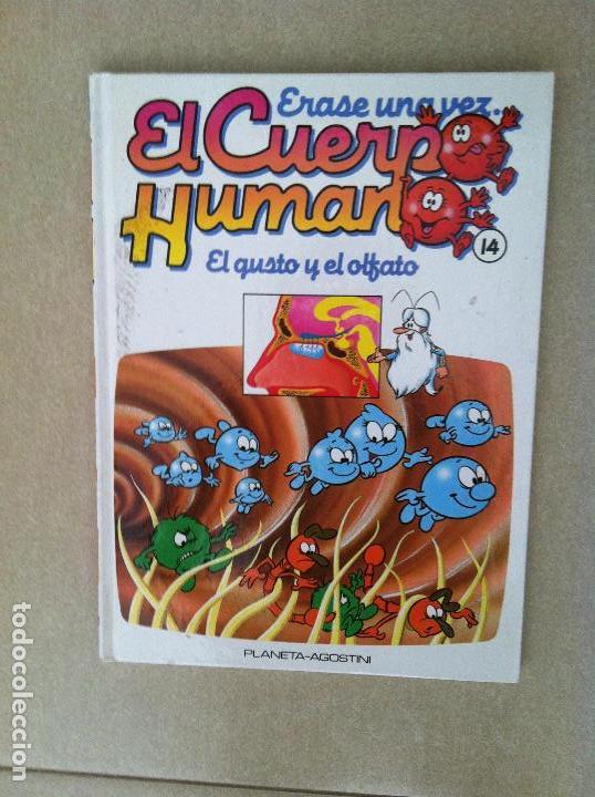 ERASE UNA VEZ EL CUERPO HUMANO Nº 14 PLANETA AGOSTINI (Libros Nuevos - Literatura Infantil y Juvenil - Cuentos infantiles)