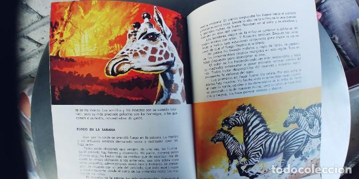Libros: LA VIDA DE LOS ANIMALES SALVAJES ,EDICIONES EVEREST ,TAPA DURA - Foto 4 - 251636570