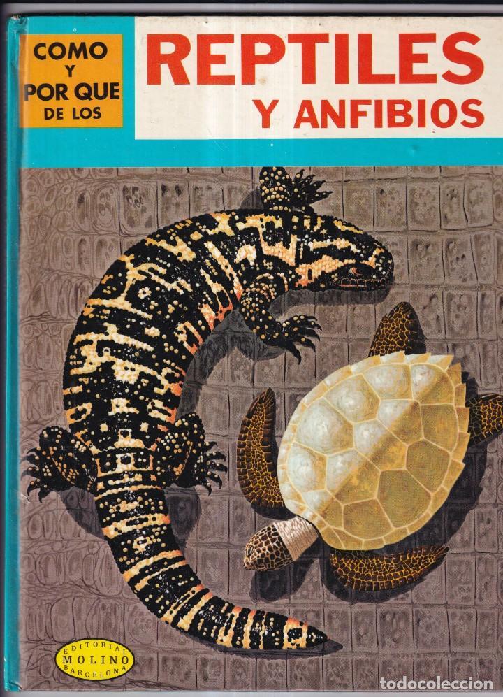 COMO Y POR QUE DE LOS REPTILES Y ANFIBIOS - Nº22 - ED. MOLINO 1970 (Libros Nuevos - Literatura Infantil y Juvenil - Cuentos juveniles)