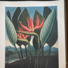 Libros: THE TEMPLE OF FLORA BY TASCHEN. Lote 193912185