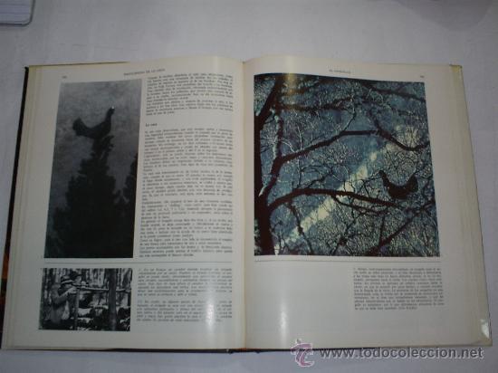 Coleccionismo deportivo: Enciclopedia de la Caza Arte y Técnica del buen cazador 2 TOMOS Argos 1986 RM40869 - Foto 3 - 27182704