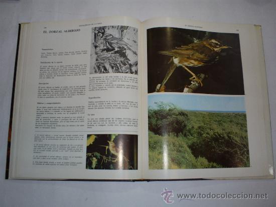 Coleccionismo deportivo: Enciclopedia de la Caza Arte y Técnica del buen cazador 2 TOMOS Argos 1986 RM40869 - Foto 4 - 27182704