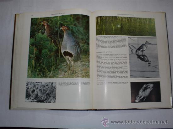Coleccionismo deportivo: Enciclopedia de la Caza Arte y Técnica del buen cazador 2 TOMOS Argos 1986 RM40869 - Foto 8 - 27182704