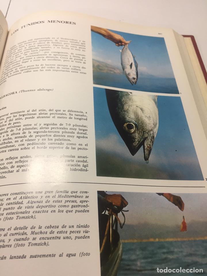 Coleccionismo deportivo: Enciclopedia de la Pesca - Foto 8 - 204474670