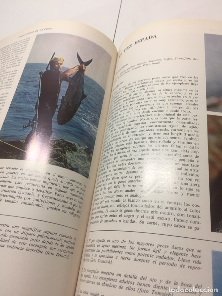 Coleccionismo deportivo: Enciclopedia de la Pesca - Foto 9 - 204474670