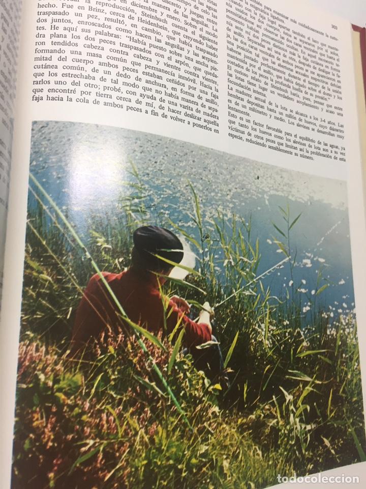 Coleccionismo deportivo: Enciclopedia de la Pesca - Foto 20 - 204474670