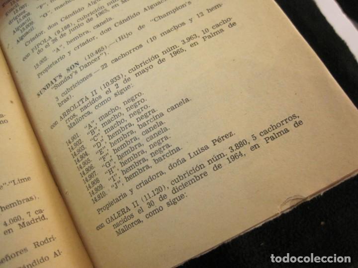 Coleccionismo deportivo: GALGOS-FEDERACION ESPAÑOLA GALGUERA-MEMORIA DEPORTIVA 1965-VER FOTOS-(K-2084) - Foto 54 - 248306145