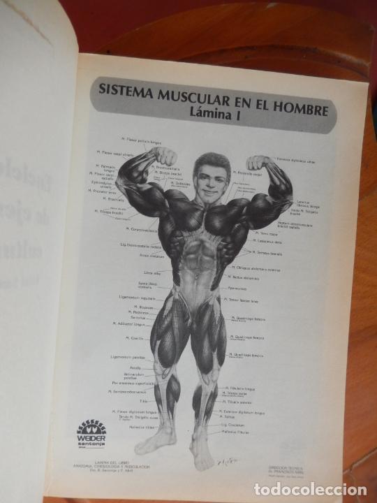 Coleccionismo deportivo: ENCICLOPEDIA DE EJERCICIOS CULTURISTAS - R. SANTONJA GÓMEZ - 1989. - Foto 3 - 269456838