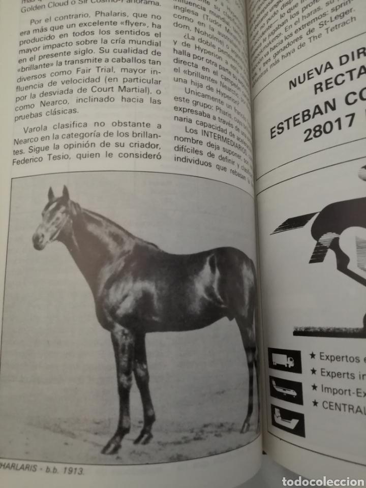 Coleccionismo deportivo: RECTA FINAL. REVISTA HÍPICA: TOMO CON 17 NÚMEROS: DE 369 (1/09/1987) A 385 (29/12/1987) - Foto 8 - 270679423