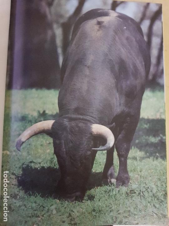 Libros: EN TIERRAS DEL TORO BRAVO - TEXTO DE ALVARO DOMECQ Y DIEZ - TRIGO ED. S.L. - AÑO 1995 (ILUST) - Foto 2 - 142149230