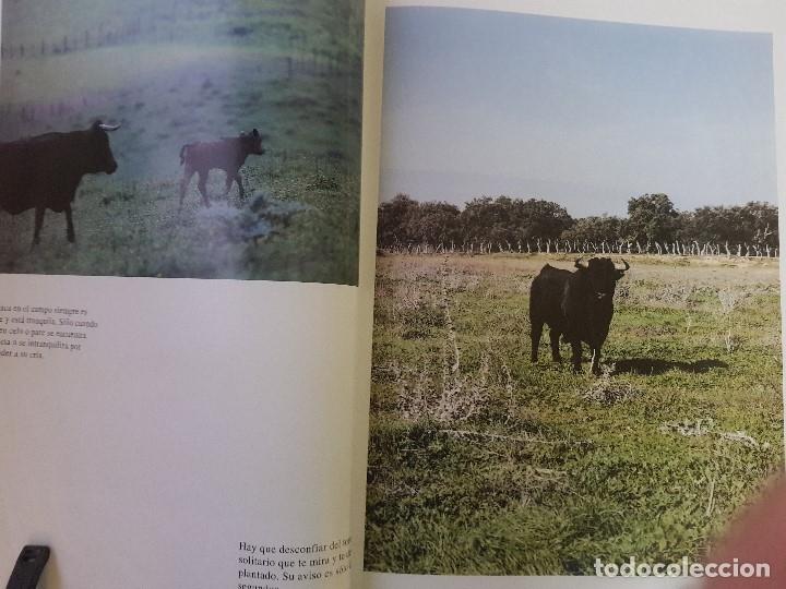 Libros: EN TIERRAS DEL TORO BRAVO - TEXTO DE ALVARO DOMECQ Y DIEZ - TRIGO ED. S.L. - AÑO 1995 (ILUST) - Foto 5 - 142149230