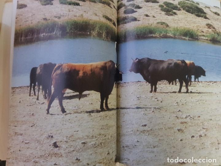 Libros: EN TIERRAS DEL TORO BRAVO - TEXTO DE ALVARO DOMECQ Y DIEZ - TRIGO ED. S.L. - AÑO 1995 (ILUST) - Foto 6 - 142149230