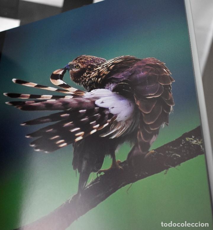 Libros: Visión salvaje, fotógrafos 2006 - Foto 3 - 148409770