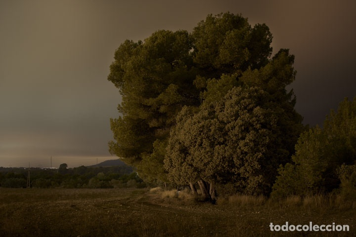 Libros: In the fields of gold. Miquel Llonch - Foto 3 - 234374145
