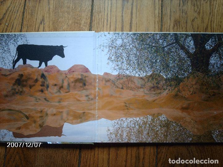 Libros: tomatito et saladelle - historia de un gitano y un toro - en frances - Foto 2 - 96899747