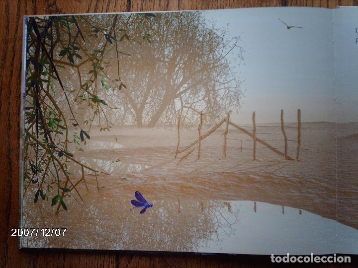 Libros: tomatito et saladelle - historia de un gitano y un toro - en frances - Foto 25 - 96899747