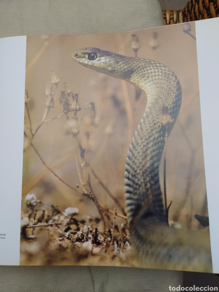 Libros: Sierra de San Pedro - Foto 3 - 241019510